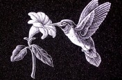 Hand Etchings – Hummingbird