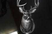Hand Etchings – Deer